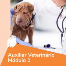 ic_auxiliarvetmod1